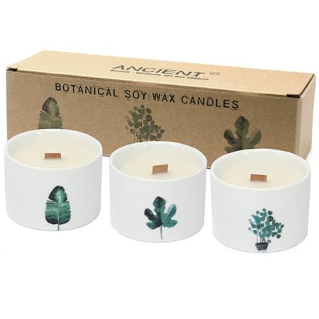 Pack of 3 Botanical Candles - Medium sized | Lemon Honeysuckle Fragrance