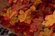 Pack foglie autunnali