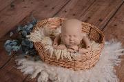 Nest Wacholder