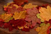 Pack de hojas de otoño