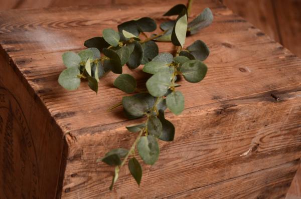 Zweig Eukalyptus 75 cm