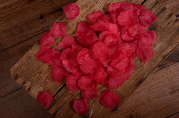 Blumenblätter in Fuchsiapink