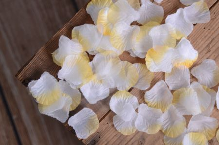 White and yellow petals