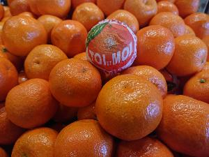 Clementine toi & moi orri