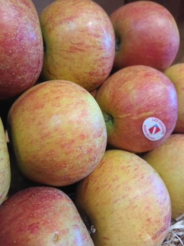 Pommes Cox orange