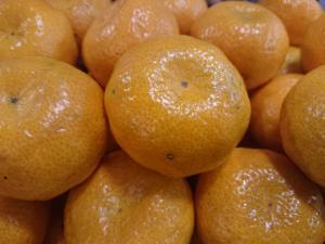 Mandarine sans pépins