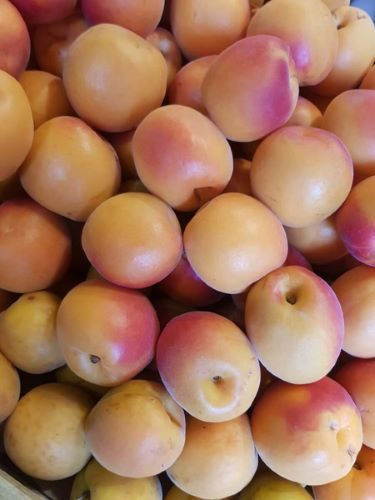 Abricots big red