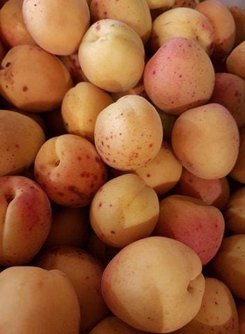Abricots à confitures