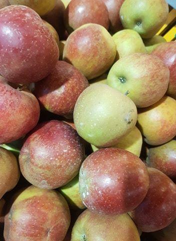 Pommes Cox orange les 4