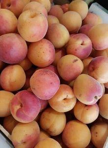 Abricot bergarouge