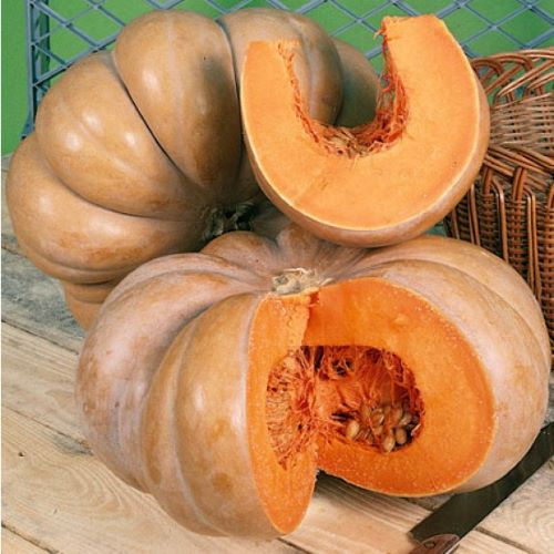 Courge muscade