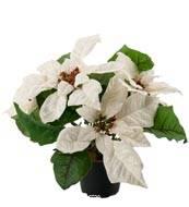 Poinsettia artificiel en Pot H 26 cm tres dense 5 fleurs creme