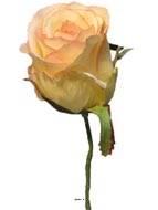Tete de rose Artificielle D 5 cm sur tige ideale mariage Rose-crème