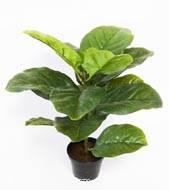 Ficus Lyrata artificiel Vert H 55 cm en pot superbe effet