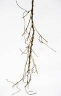 Branche liane ramifiee artificielle L 130 cm Brune mousse PU arme
