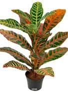 Croton plante artificielle en pot H 40 cm tres dense