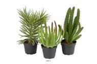 Succulentes plantes artificielles lot de X3 Cactus factices en pot H 13-17 cm