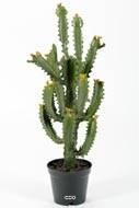 Cactus Euphorbe artificiel cactée en pot Vert Qualité Pro et décorateurs H 70 cm D 30 cm Vert aloe