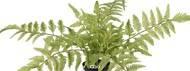 Fougère des forêts osmuda regalis artificielle en pot, H 40 cm