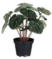 Pépéromia, plante artificielle en pot lesté, H 20 cm D 20 cm, très dense, Vert