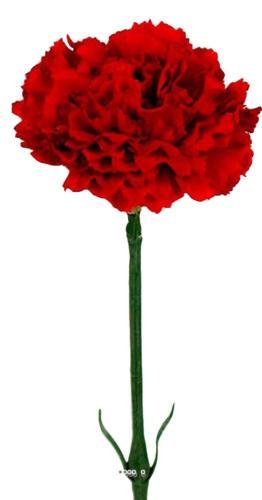 Oeillet artificiel H 55 cm superbe Tete tissu D 8,50 cm Rouge
