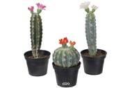 Cactus fleuris artificiels en pot en lot de 3 Cactées factices H 13 à 20 cm