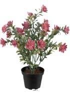 Succulente fleurie artificielle en pot, cactée fleurie Vieux Rose H 30 cm D 25 cm plastique