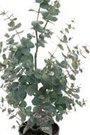 Eucalyptus artificiel en pot, H 95 cm, D 16 cm