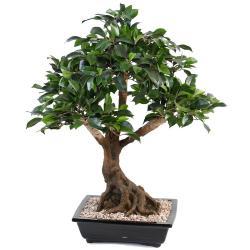 Bonsaï Ficus Artificiel H 55 cm D 60 cm en pot