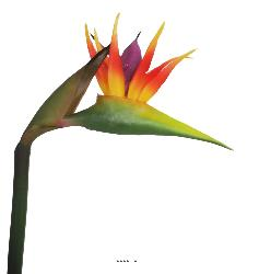 Strelitzia Arabica artificiel H 62 cm oiseau du paradis tete latex