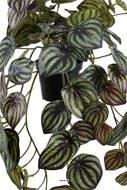 Pépéromia artificiel panaché H 20 cm L 45 cm en pot