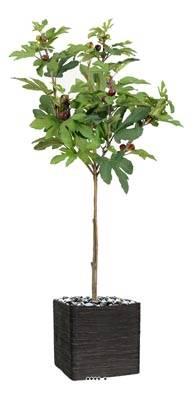 Figuier tige artificiel en pot avec fruits H 150 cm D 85 cm