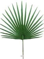 Feuille palmier Chamaerops artificielle H 53 cm D 36 cm ext
