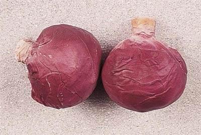Choux rouge artificiel en lot de 2 en Plastique soufflé H 130x120 mm