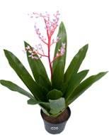 Bromélia artificielle en pot, avec bouton de fleurs, H 40 cm