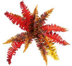 Fougère Persane Automnale Artificielle 15 feuilles D 50 cm en piquet