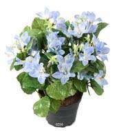Campanules artificielles en pot, H 25 cm Bleu ciel