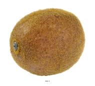 Kiwi fruit artificiel Hauteur 7 cm et D 5 cm avec leste