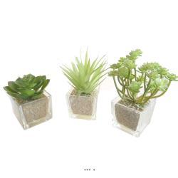 Agave Succulente cactee lot de 3 en pot verre H 9-16 cm Vert Type A