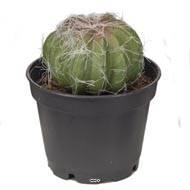 Cactées plantes artificielles lot de X3 Cactus factices en pot H 8-13 cm