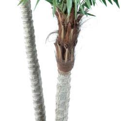 Palmier Phoenix Artificiel H 250 cm D 140 cm en pot