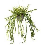 Rhipsalis artificiel, cactus gui, suspendu L 55 cm
