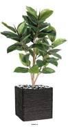 Ficus Robusta Artificiel tronc PE en pot superbe et rare H 90 cm D 65 cm Vert