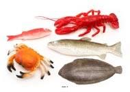 Fruits de la mer artificiels assortis en lot de 5 en Plastique soufflé
