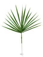 Feuille palmier Chamaerops artificielle H 44 cm D 34 cm Plastique exterieur