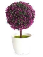 Mini plante topiaire Violet deco H 25 cm  en pot plastique blanc superbe