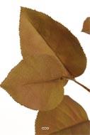 Branche de Pommier artificiel H 72 cm Havane feuillage tissu