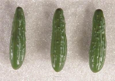 Concombre vert artificiel en lot de 3 en Plastique soufflé L 180x50 mm