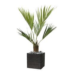 Palmier Kentia Artificiel Howea H 100 cm 78 feuilles en pot
