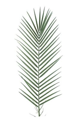 Feuille de Palmier Phoenix artificielle plastique PVC H 95 cm